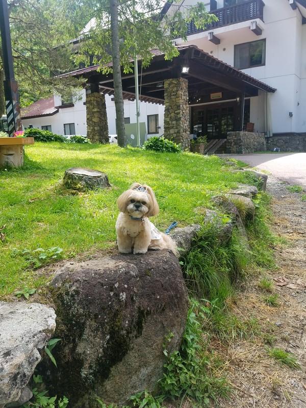飛騨高山へ旅 ~ワンちゃんと泊まれるホテル偏~