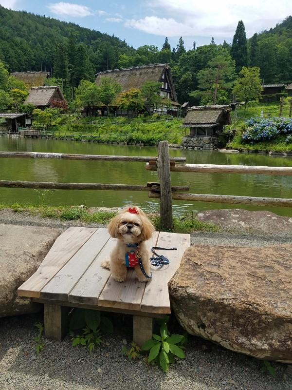 飛騨高山へ旅 ~ワンちゃんと一緒に観光&食事偏~その1
