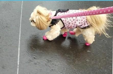 お散歩が楽しい♪~靴下タイプの靴~