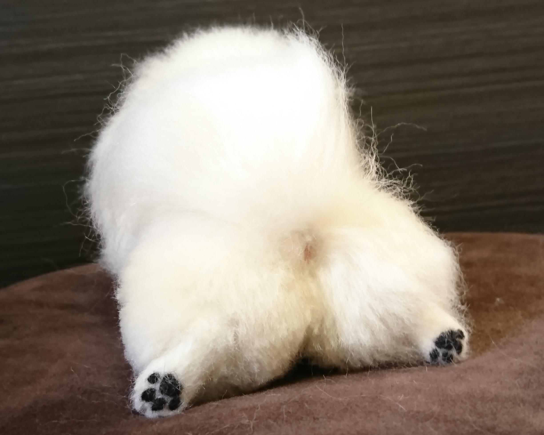 お散歩の後の手足の汚れ、どうしてますか?